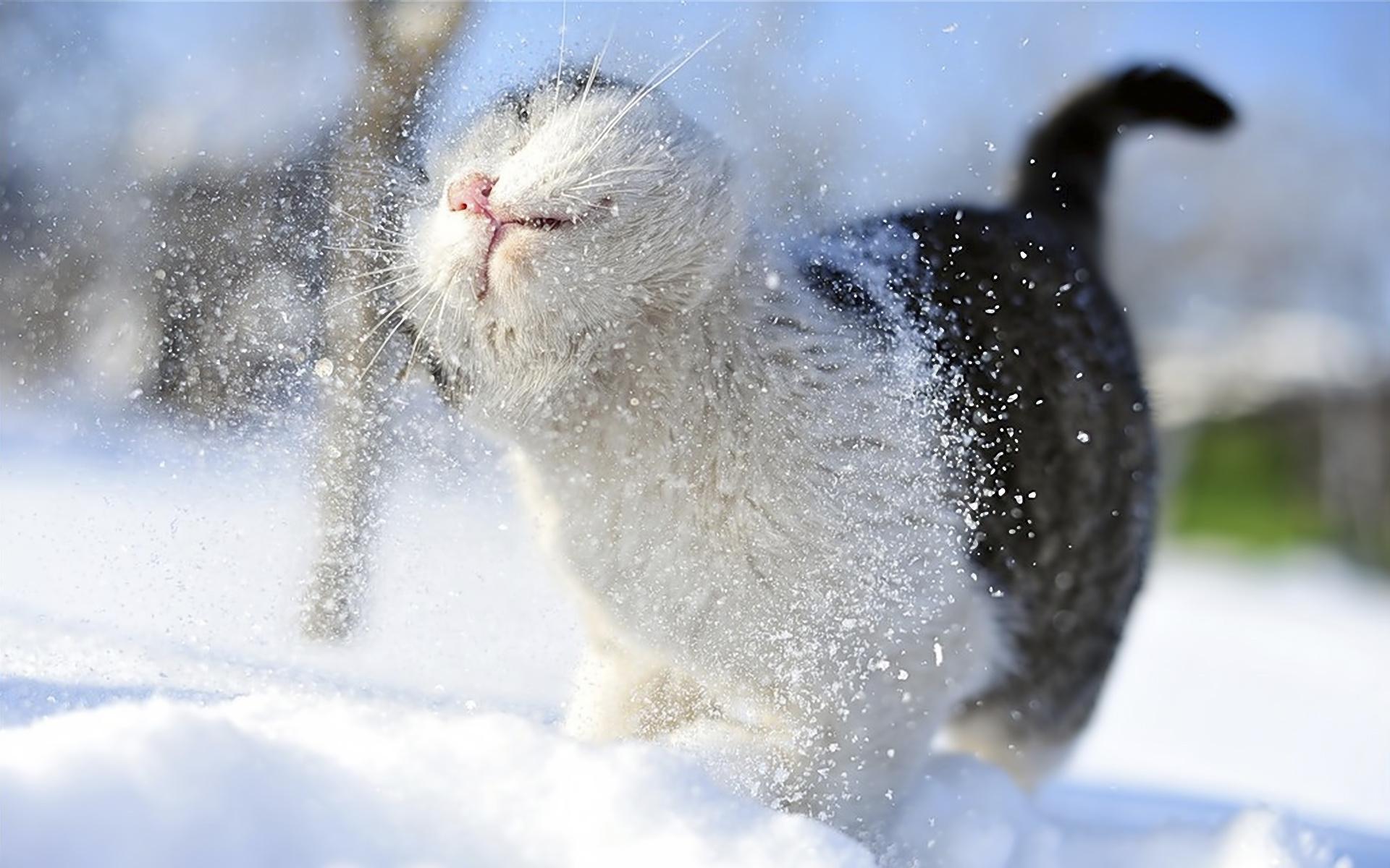 Tiere - Katze  Hintergrundbild
