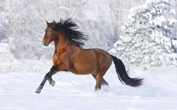 Animal - Horse Wallpapers and Backgrounds ID : 101545