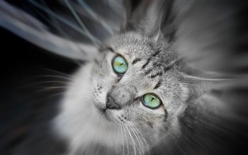 Animal - Cat Wallpapers and Backgrounds ID : 101857