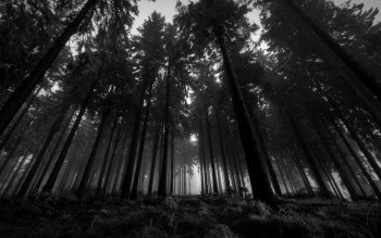 Erde - Wald Wallpapers and Backgrounds ID : 101977