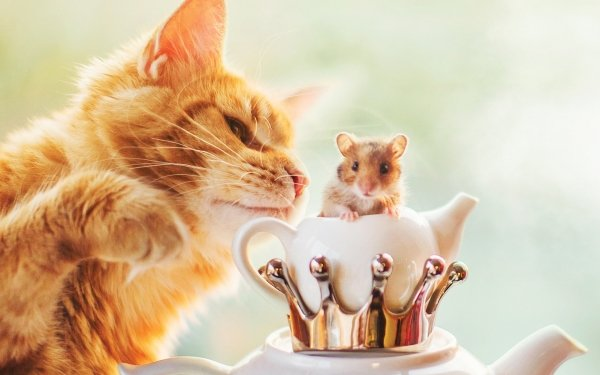 Animal Cat Cats Hamster Pet HD Wallpaper   Background Image