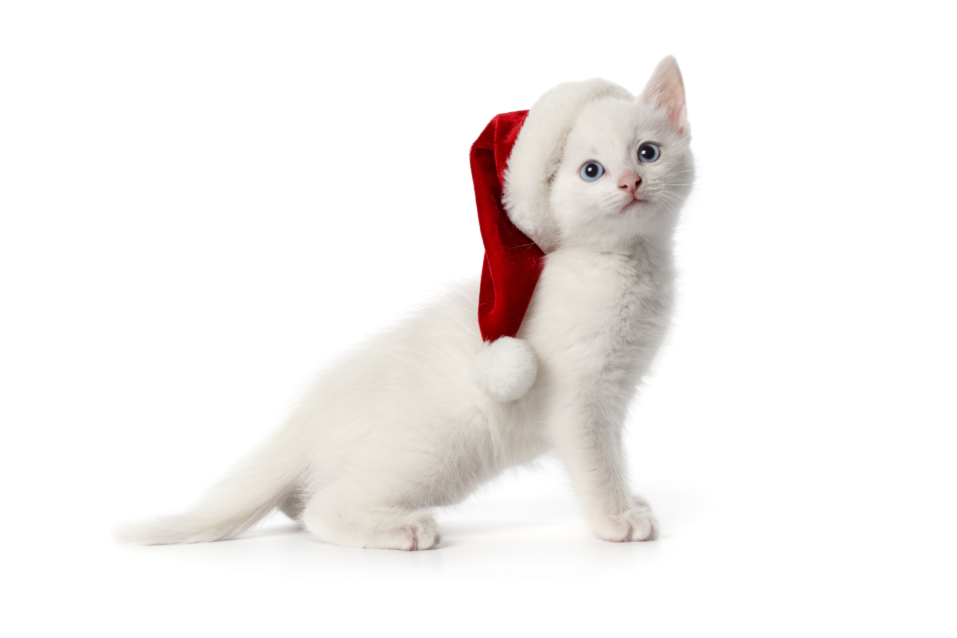 299 santa hat hd wallpapers   background images - wallpaper abyss