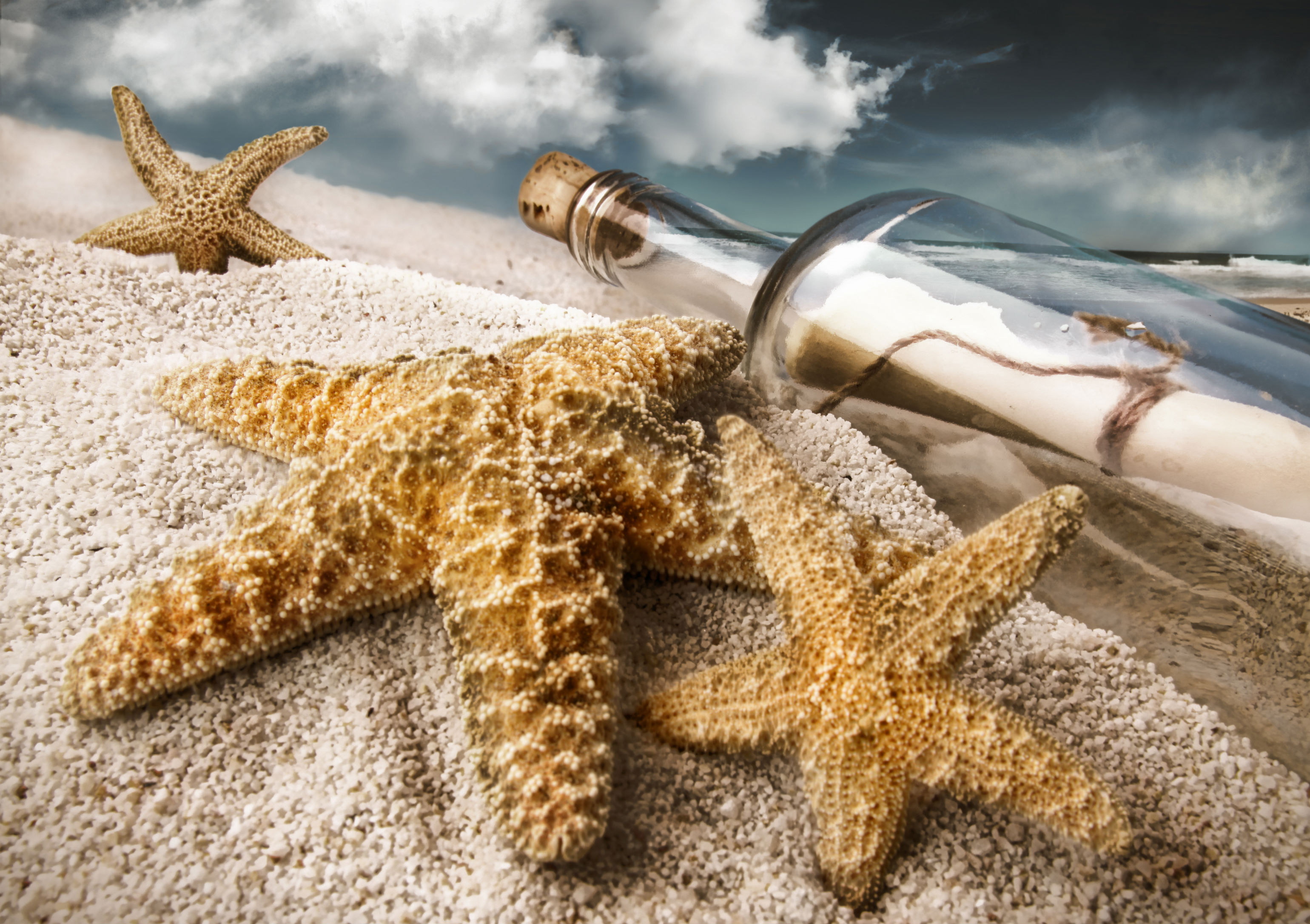 Starfish Full HD Wallpaper And Background Image