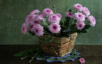 Photography - Still Life Wallpapers and Backgrounds ID : 102445