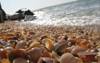 Earth - Shell Wallpapers and Backgrounds ID : 102507