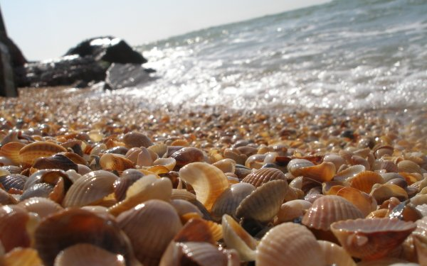 Earth Shell HD Wallpaper | Background Image