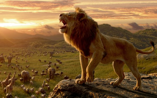 Movie The Lion King (2019) Lion Mufasa HD Wallpaper | Background Image