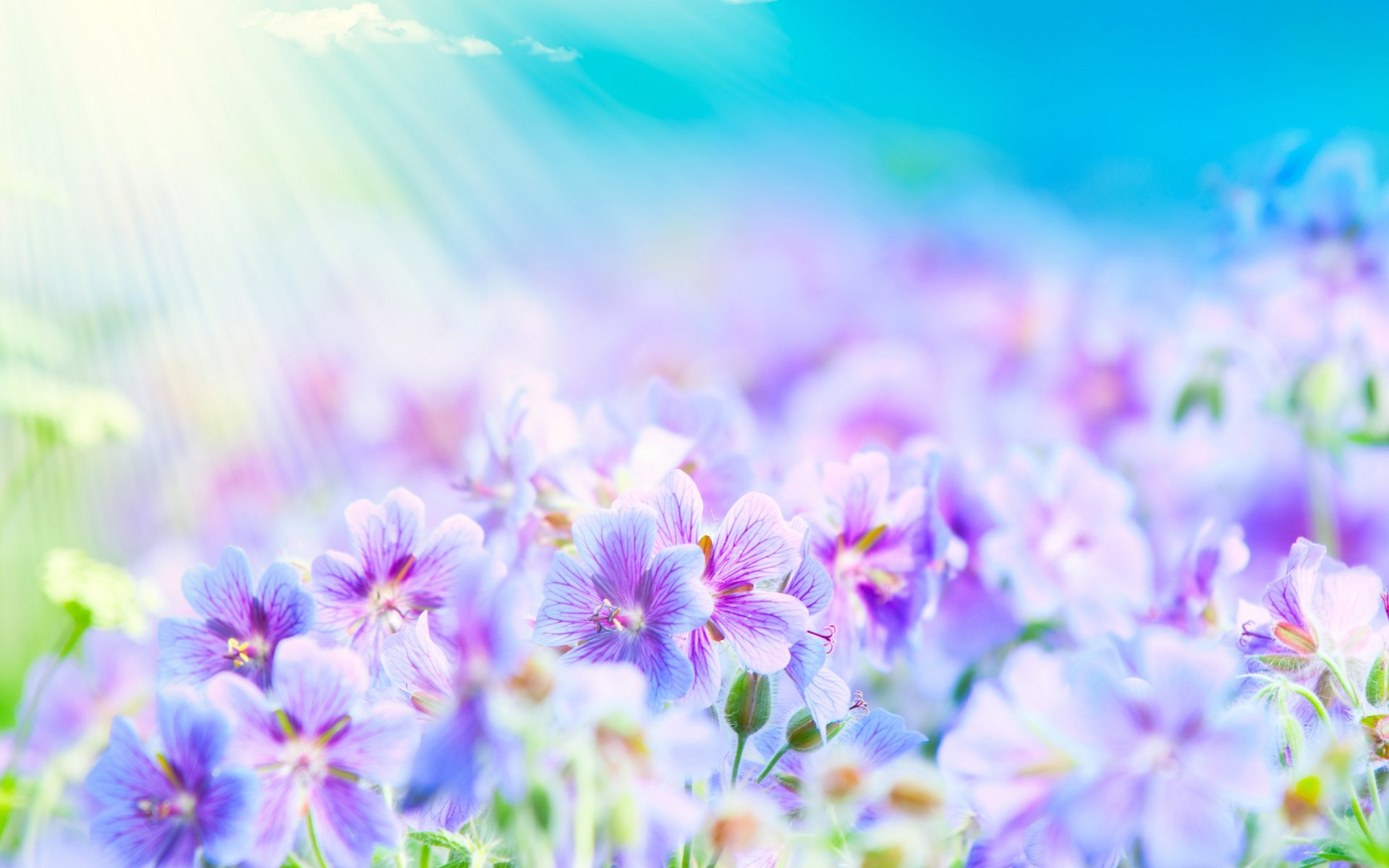 Earth - Flower  Light Wallpaper