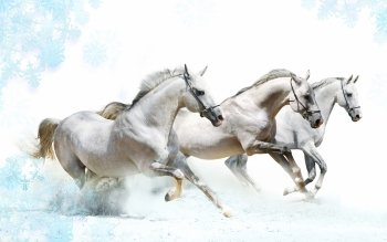 Animal - Horse Wallpapers and Backgrounds ID : 103297