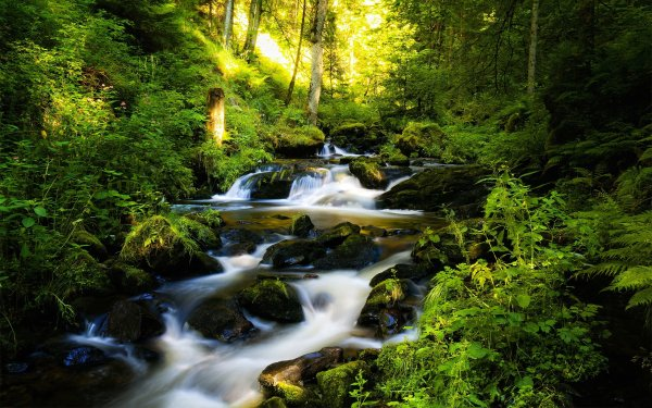 Earth Stream Forest Waterfall Creek HD Wallpaper | Background Image