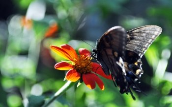 Animal - Butterfly Wallpapers and Backgrounds ID : 105027