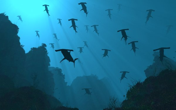 Animal CGI Shark Hammerhead Shark Ocean Underwater HD Wallpaper | Background Image