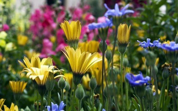 Earth Flower Flowers Garden Colorado HD Wallpaper | Background Image