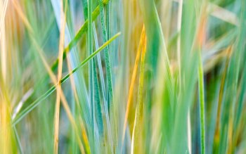 Earth - Grass Wallpapers and Backgrounds ID : 106079