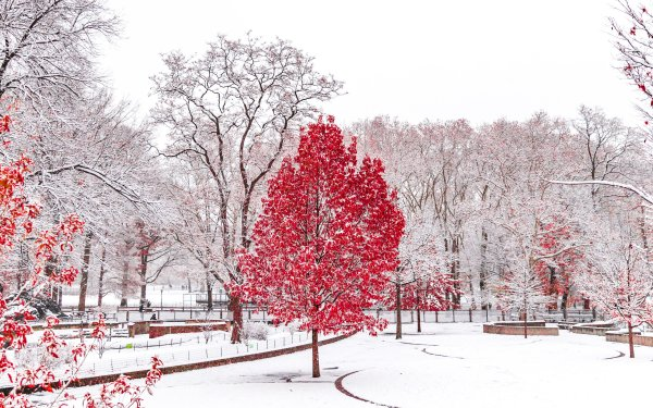 Man Made Central Park Snow HD Wallpaper   Background Image
