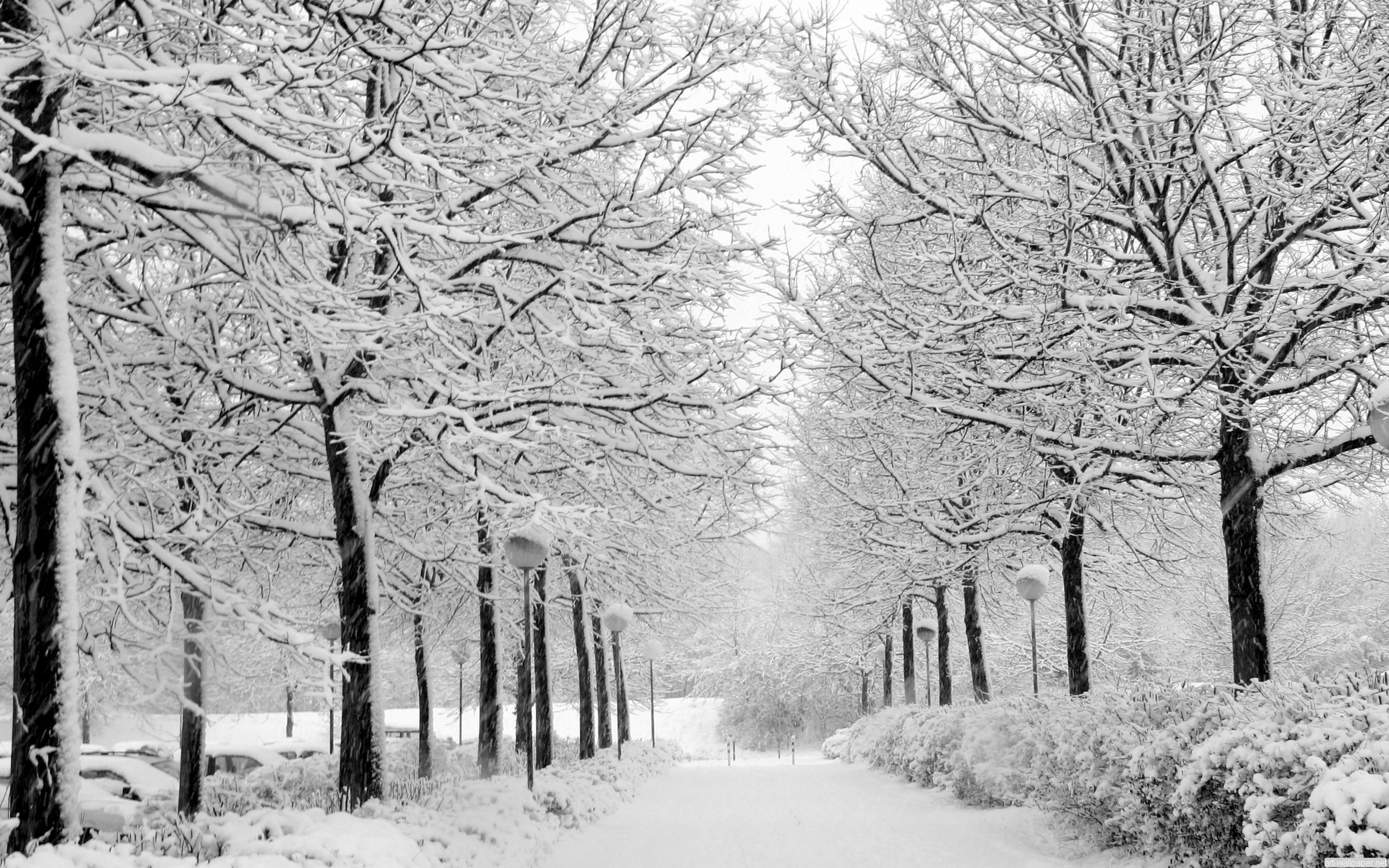 Earth - Winter  Love Tree White Cold Snow Wallpaper
