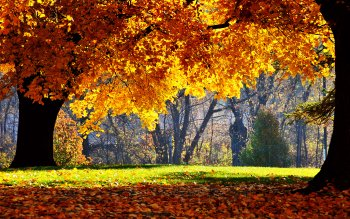 Earth - Autumn Wallpapers and Backgrounds ID : 108667