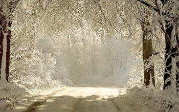 Photography - Winter Wallpapers and Backgrounds ID : 111187