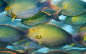 Animal - Fish Wallpapers and Backgrounds ID : 111257