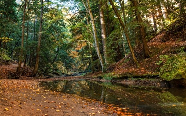 Earth Fall Forest Stream Ohio HD Wallpaper   Background Image