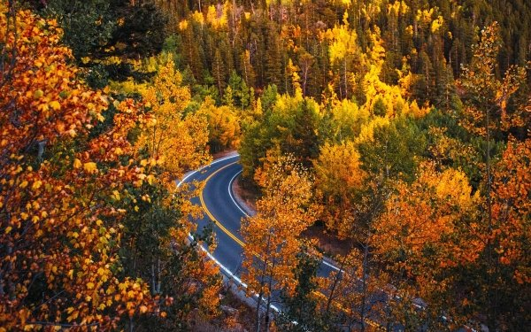 Man Made Road Fall Forest Colorado HD Wallpaper | Background Image
