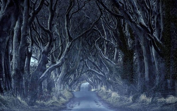 Man Made Path Road Tree Tunnel Northern Ireland HD Wallpaper | Background Image