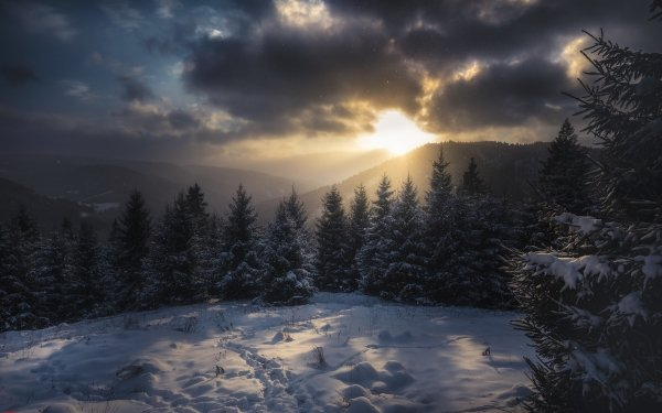 Earth Winter Snow Mountain Cloud Nature Spruce Carpathian Mountains Sunlight HD Wallpaper | Background Image