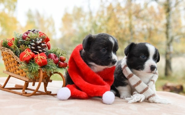 Animal Puppy Dogs Sled Dog Baby Animal Christmas HD Wallpaper   Background Image