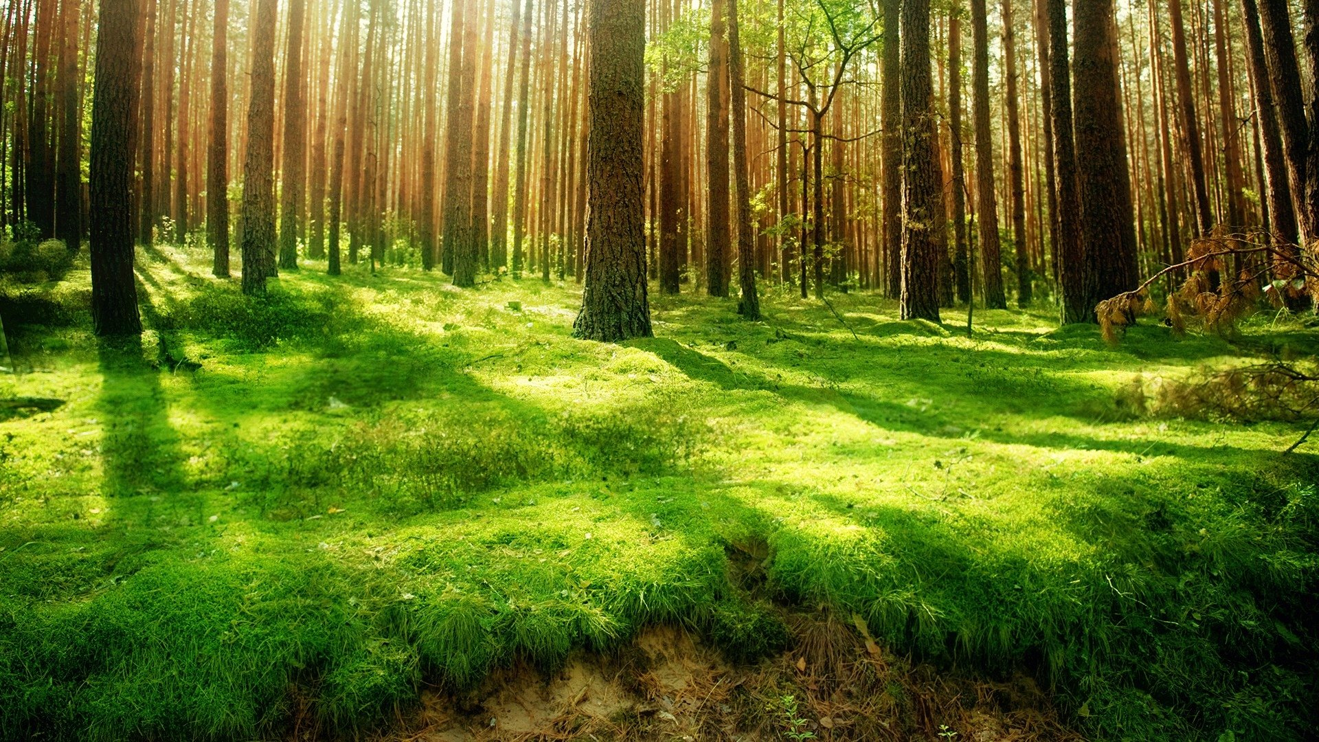 1780 Forest HD Wallpapers