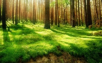Earth - Forest Wallpapers and Backgrounds ID : 112487
