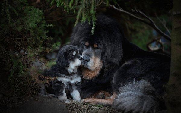 Animal Dog Dogs Puppy Pet Baby Animal HD Wallpaper | Background Image