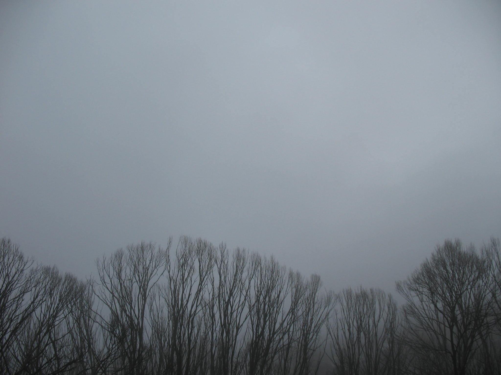 Earth - Sky  Tree Fog Wallpaper