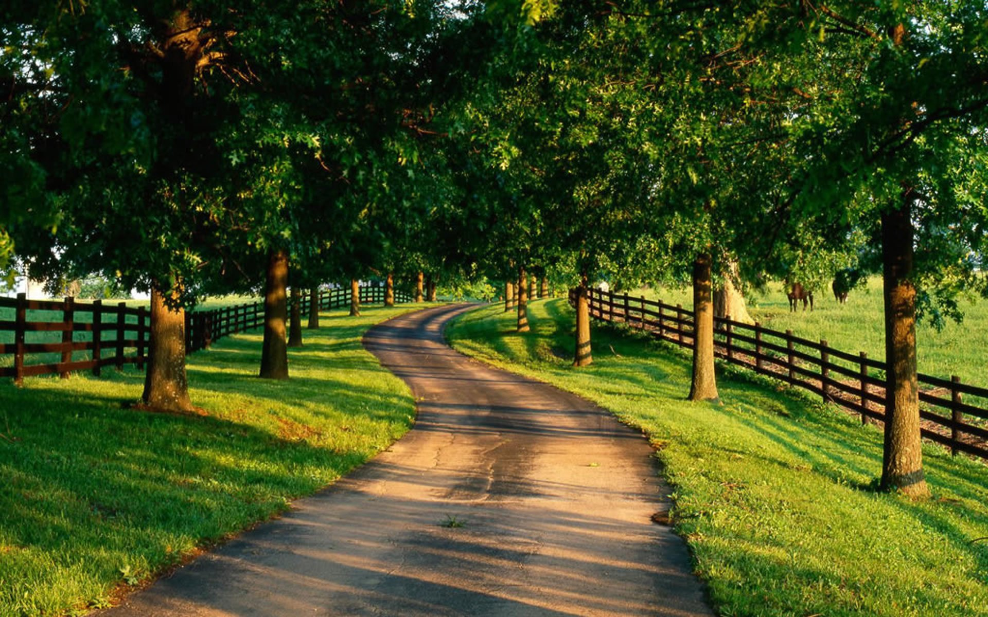 Road HD Wallpapers Background Images Wallpaper