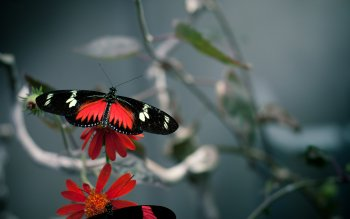 Animal - Butterfly Wallpapers and Backgrounds ID : 114705