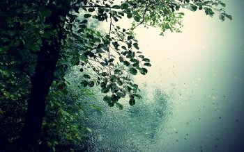 Photography - Rain Wallpapers and Backgrounds ID : 114939