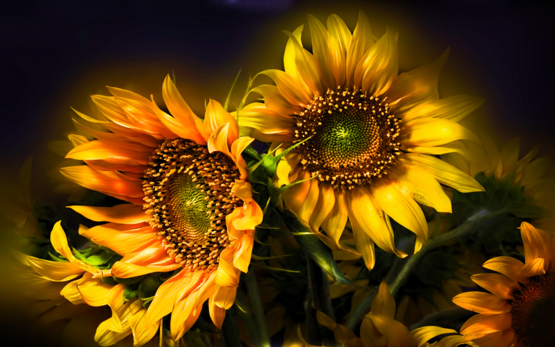 418 sunflower hd wallpapers background images