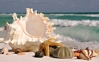 Earth - Shell Wallpapers and Backgrounds ID : 115289