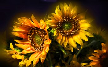 Earth - Sunflower Wallpapers and Backgrounds ID : 115755