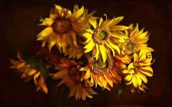 Earth - Sunflower Wallpapers and Backgrounds ID : 115757