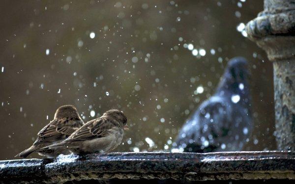 Animal Sparrow Birds Passerines Bird HD Wallpaper | Background Image