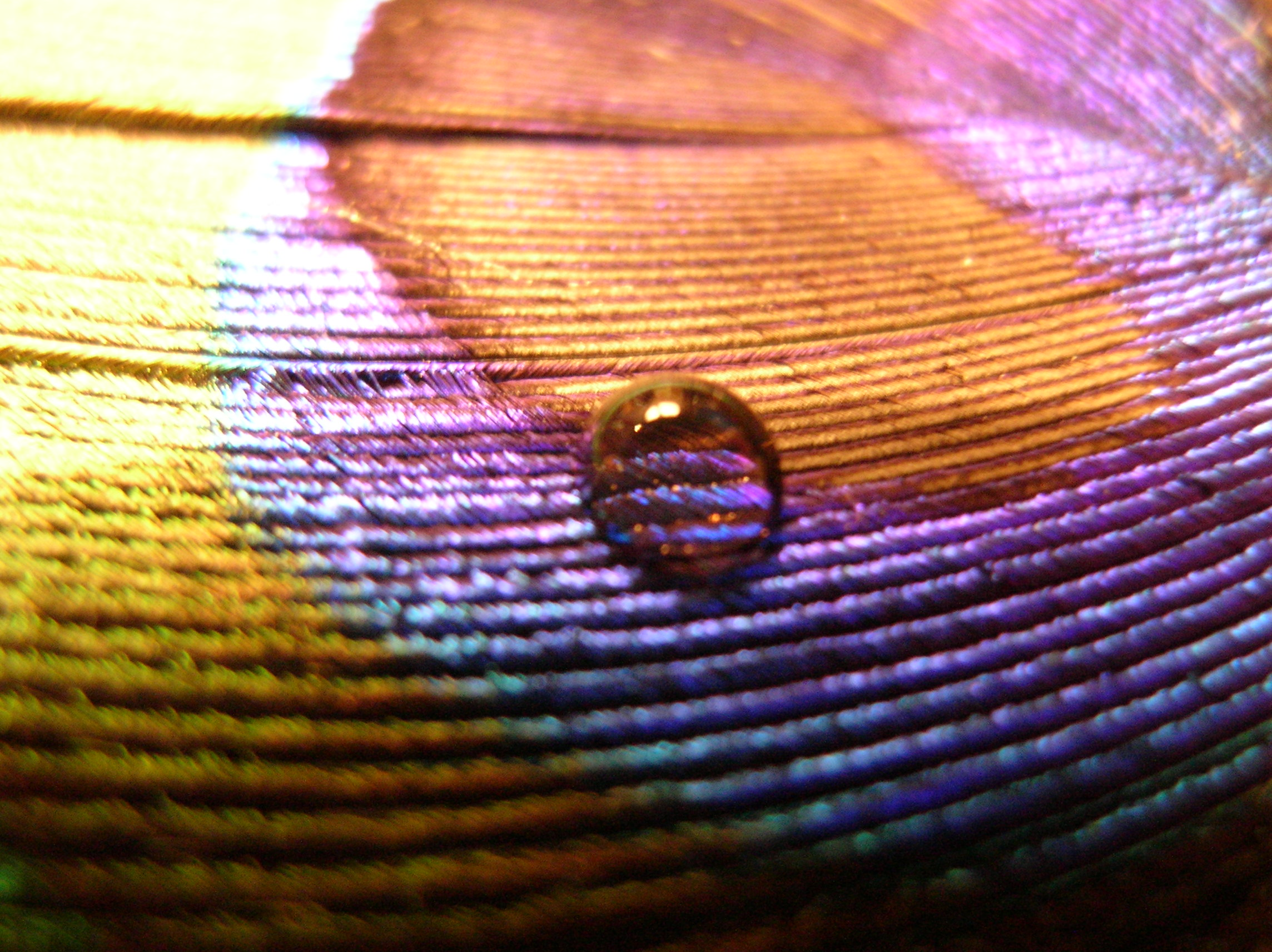 Earth - Water Drop  Brown Blue Violet Feather Love Drops Wallpaper