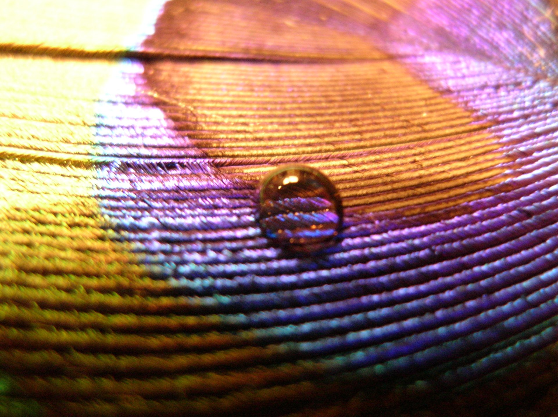 Earth - Water Drop  Brown Blue Violet Feather Love Wallpaper