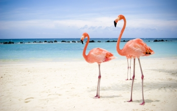Animal - Flamingo Wallpapers and Backgrounds ID : 117579