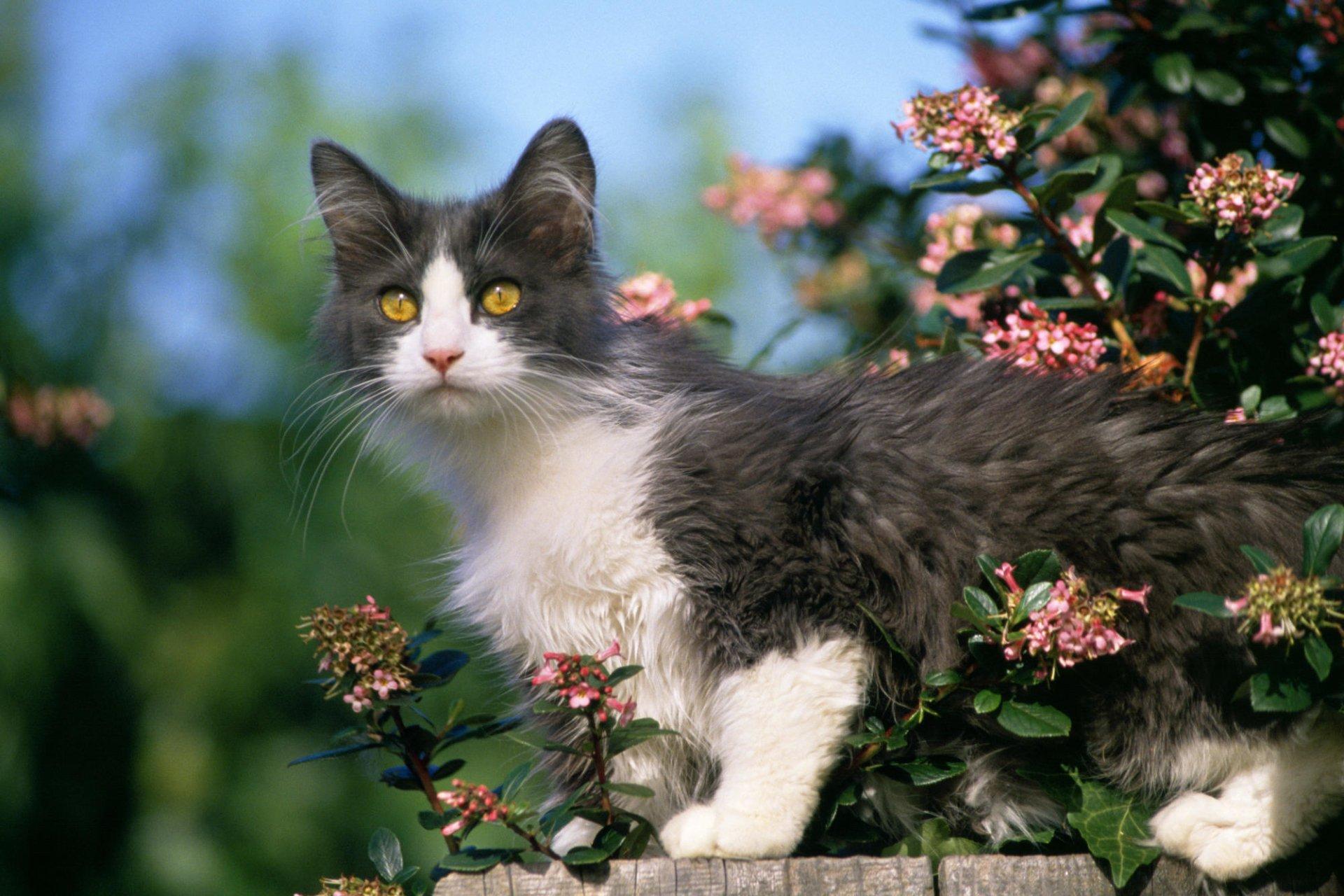 Animaux - Chat  Kitten Animaux Fond d'écran