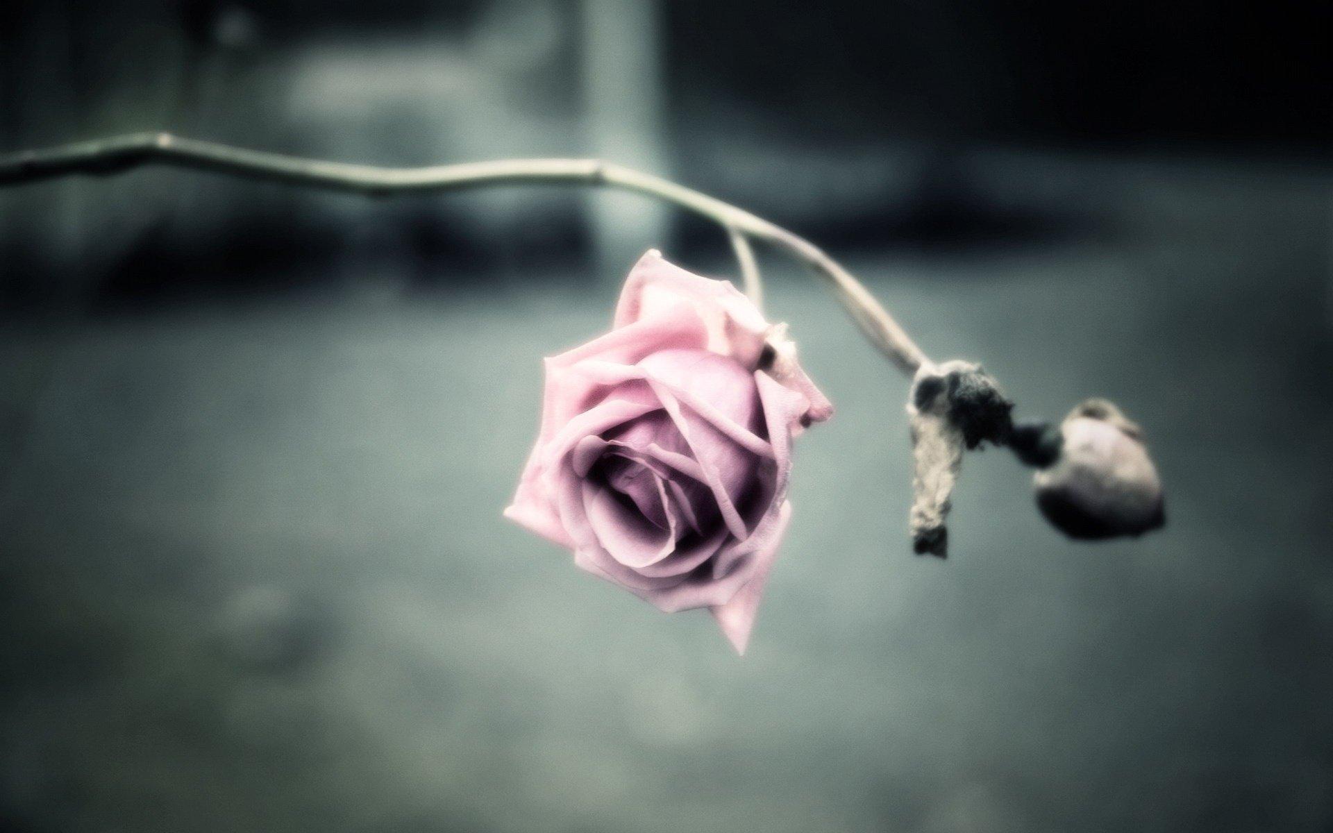 Tierra/Naturaleza - Flor  Fondo de Pantalla