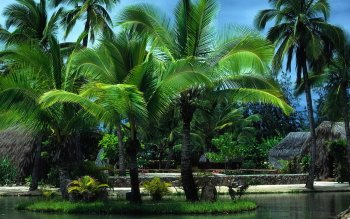Fotografie - Tropical Wallpapers and Backgrounds ID : 122019