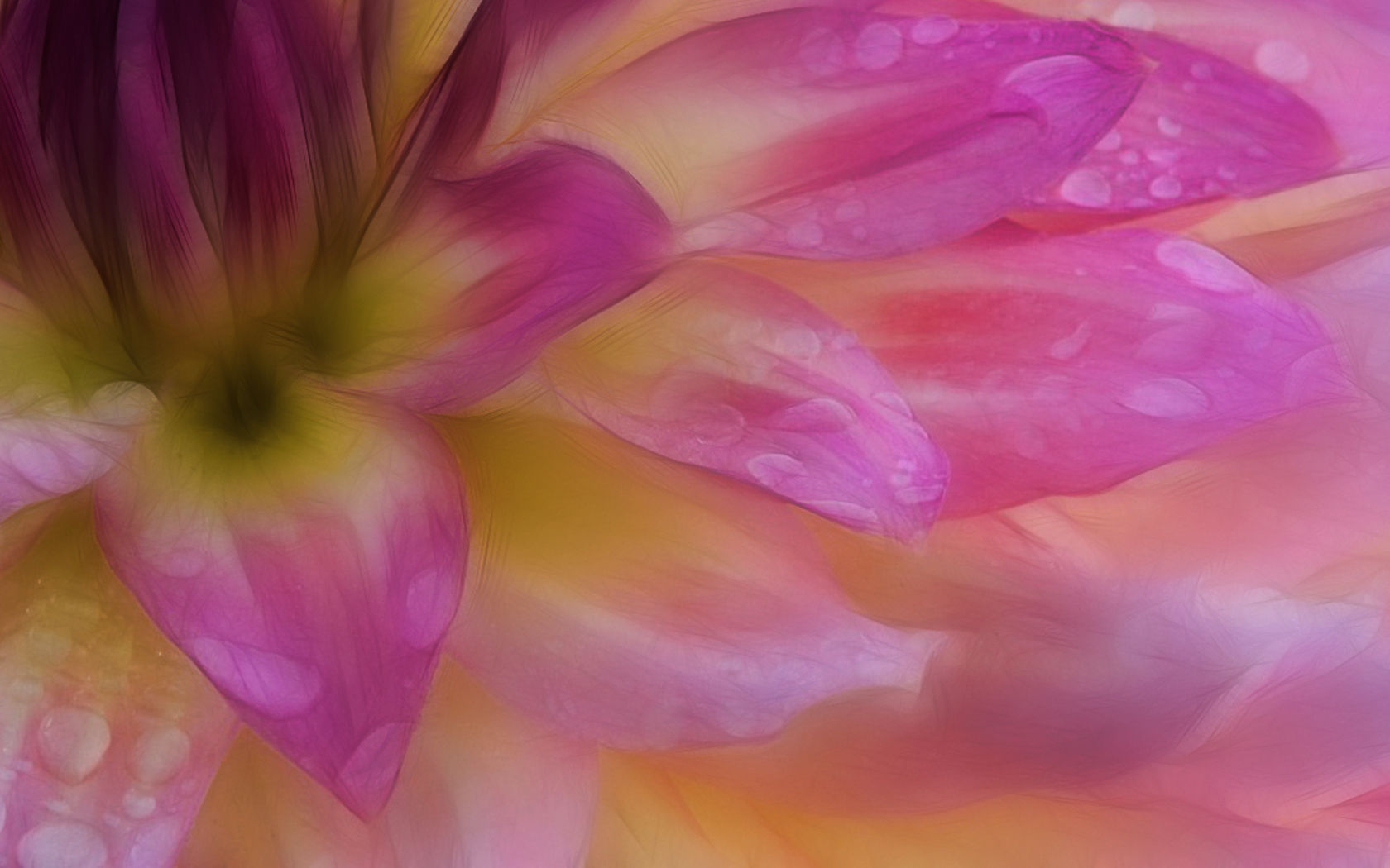 Erde/Natur - Blume  Pastel Wallpaper