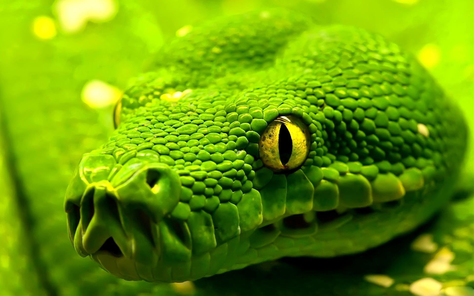 306 snake hd wallpapers | background images - wallpaper abyss