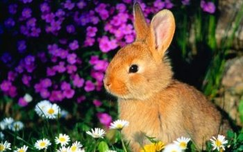 Animal - Rabbit Wallpapers and Backgrounds ID : 123667