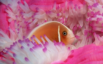 Animal - Fish Wallpapers and Backgrounds ID : 123705